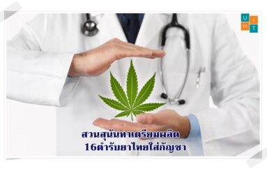 สวนสุนันทาเตรียมผลิต 16 ตำรับยาไทยใส่กัญชา